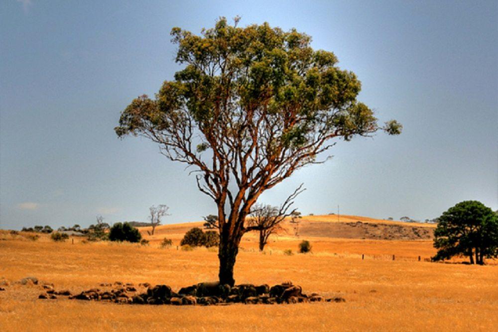 inland-victoria-rainfall-blog - Copy